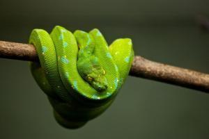significado de sueño con serpiente verde